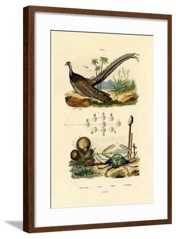 Argus Pheasant, 1833-39--Framed Art Print
