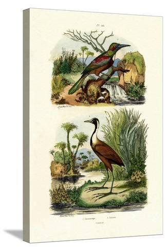 Great Jacamar, 1833-39--Stretched Canvas Print