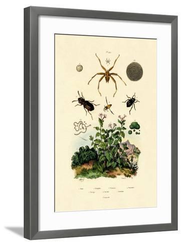 Ground Beetle, 1833-39--Framed Art Print