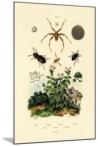 Ground Beetle, 1833-39--Mounted Giclee Print