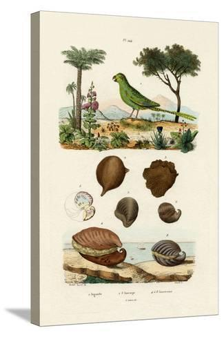 Ground Parrot, 1833-39--Stretched Canvas Print