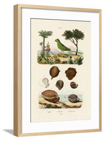 Ground Parrot, 1833-39--Framed Art Print