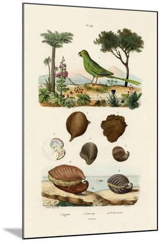 Ground Parrot, 1833-39--Mounted Giclee Print