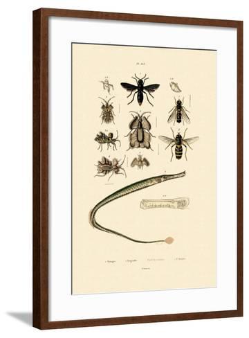Great Pipefish, 1833-39--Framed Art Print