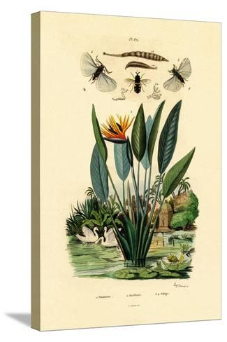 Soldier Flies, 1833-39--Stretched Canvas Print