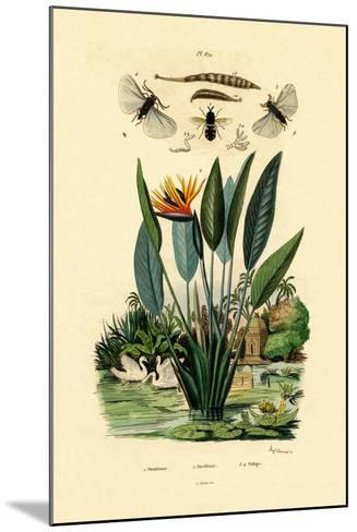Soldier Flies, 1833-39--Mounted Giclee Print