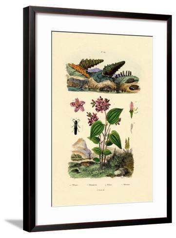 Trumpet Snail, 1833-39--Framed Art Print