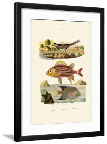 Willy Wagtail, 1833-39--Framed Art Print
