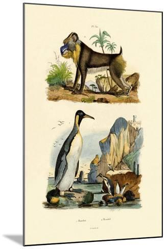 King Penguin, 1833-39--Mounted Giclee Print