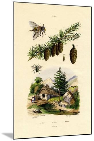 Mourning Bee, 1833-39--Mounted Giclee Print