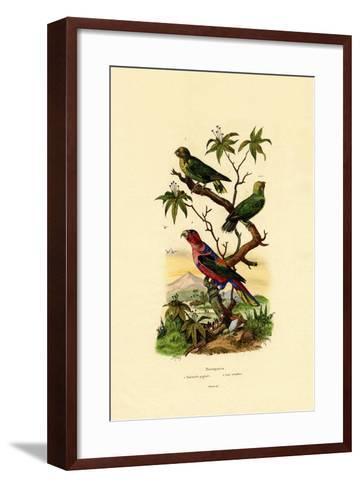 Pygmy Parrot, 1833-39--Framed Art Print