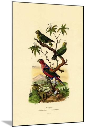 Pygmy Parrot, 1833-39--Mounted Giclee Print