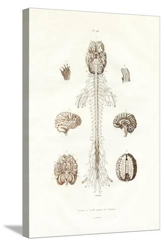 Nervous System, 1833-39--Stretched Canvas Print