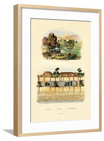 Orbicula Shell, 1833-39--Framed Art Print