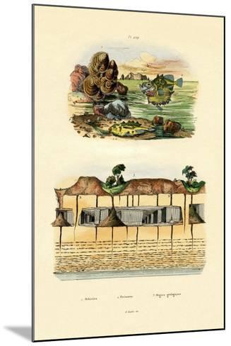 Orbicula Shell, 1833-39--Mounted Giclee Print