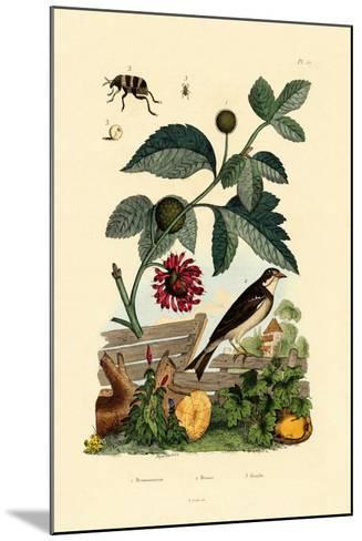 Paper Mulberry, 1833-39--Mounted Giclee Print