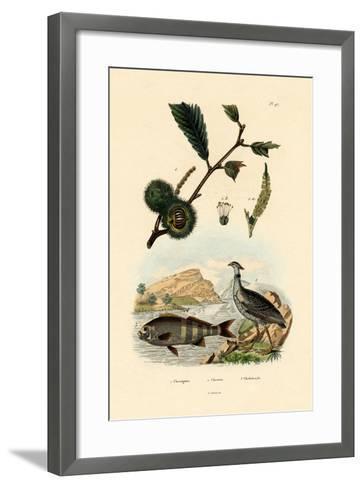 Sweet Chestnut, 1833-39--Framed Art Print