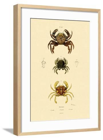 Swimming Crabs, 1833-39--Framed Art Print