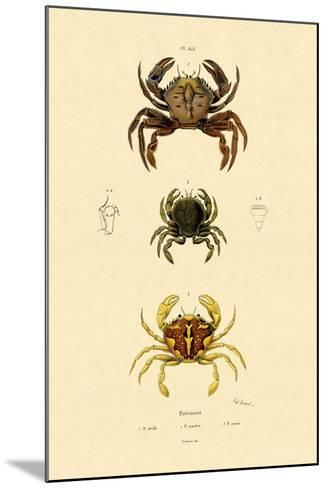 Swimming Crabs, 1833-39--Mounted Giclee Print