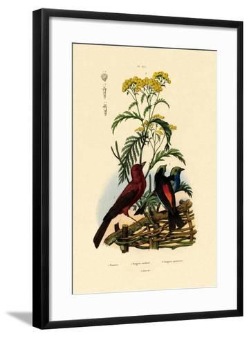 Common Tansy, 1833-39--Framed Art Print