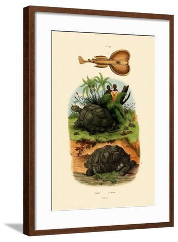 Electric Ray, 1833-39--Framed Art Print