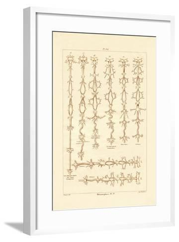 Metamorphosis, 1833-39--Framed Art Print