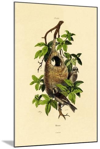 Penduline Tit, 1833-39--Mounted Giclee Print