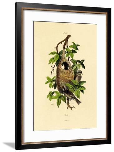 Penduline Tit, 1833-39--Framed Art Print