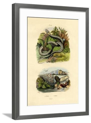 Pyrula Shells, 1833-39--Framed Art Print