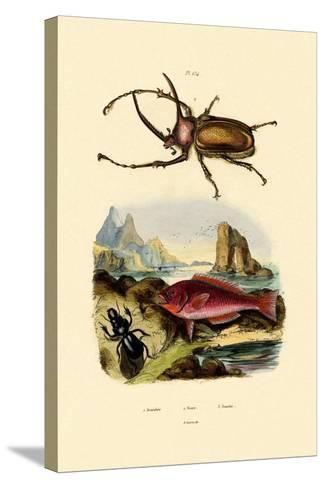 Scarab Beetle, 1833-39--Stretched Canvas Print