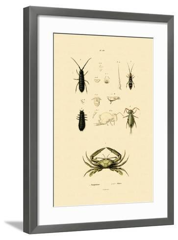 Sentinel Crab, 1833-39--Framed Art Print