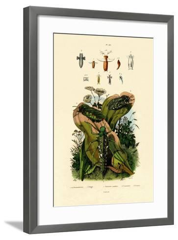 Grasshoppers, 1833-39--Framed Art Print