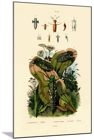Grasshoppers, 1833-39--Mounted Giclee Print