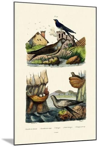 Barn Swallow, 1833-39--Mounted Giclee Print