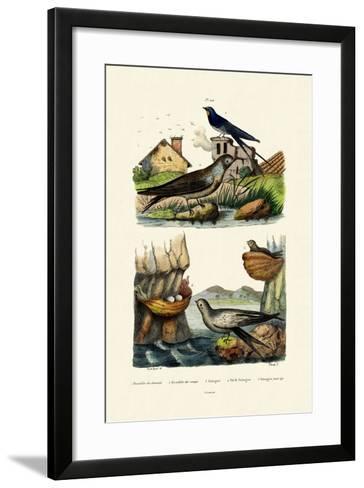 Barn Swallow, 1833-39--Framed Art Print