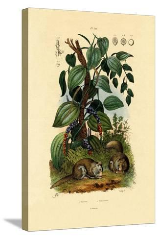 Black Pepper, 1833-39--Stretched Canvas Print