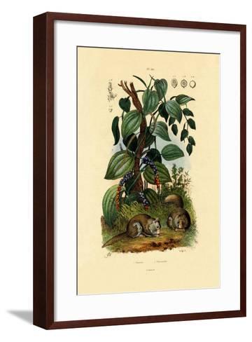 Black Pepper, 1833-39--Framed Art Print