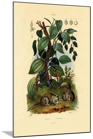 Black Pepper, 1833-39--Mounted Giclee Print
