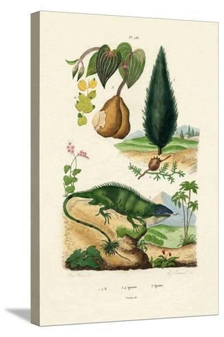 European Yew, 1833-39--Stretched Canvas Print