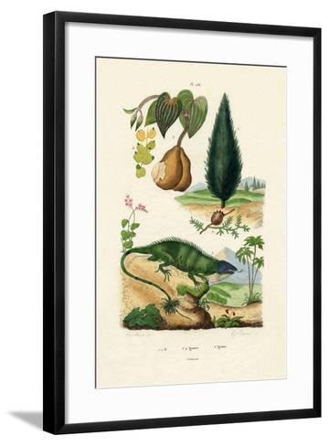 European Yew, 1833-39--Framed Art Print