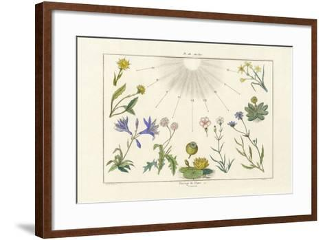 Floral Clock, 1833-39--Framed Art Print