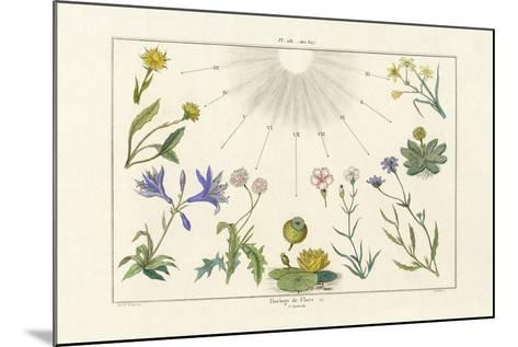 Floral Clock, 1833-39--Mounted Giclee Print