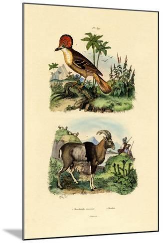 Tyrant, 1833-39--Mounted Giclee Print