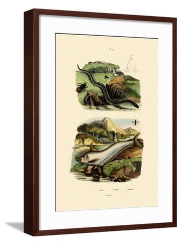 Wels Catfish, 1833-39--Framed Art Print