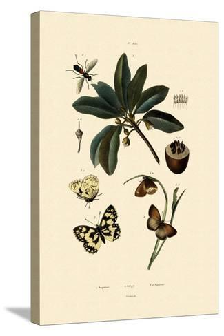 Butterfly, 1833-39--Stretched Canvas Print