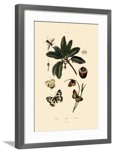 Butterfly, 1833-39--Framed Art Print