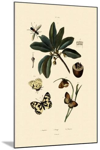 Butterfly, 1833-39--Mounted Giclee Print