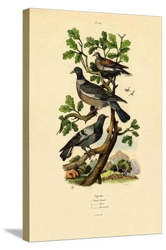 Pigeons, 1833-39--Stretched Canvas Print
