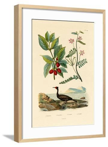 Cormorant, 1833-39--Framed Art Print
