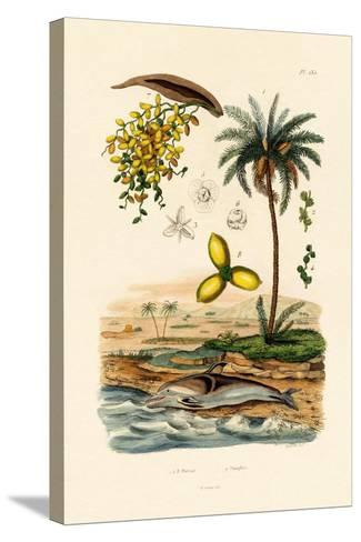 Date Palm, 1833-39--Stretched Canvas Print